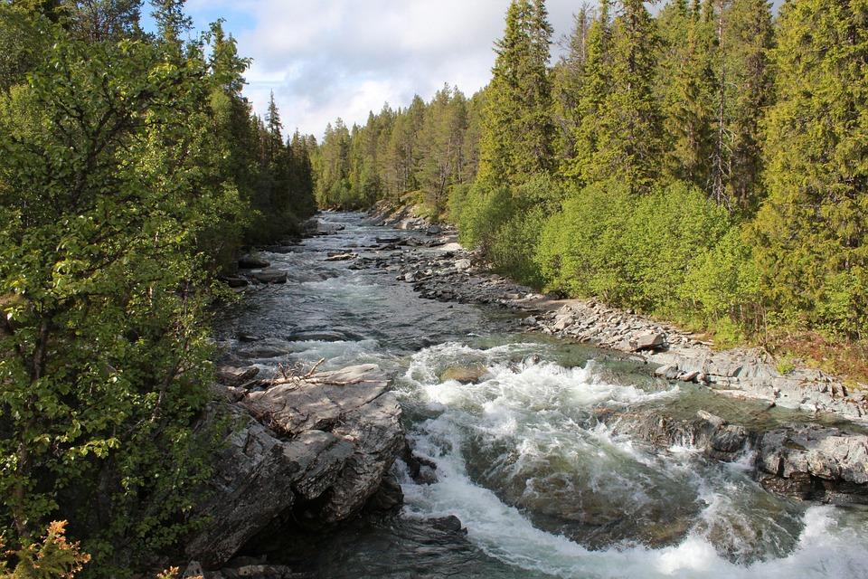 Nature, Autumn, Sweden, Forest, Leaves, Color, Stones
