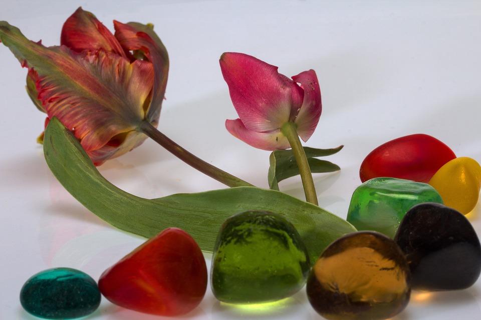 Flowers, Tulips, Stones, Decorative Stones, Plant