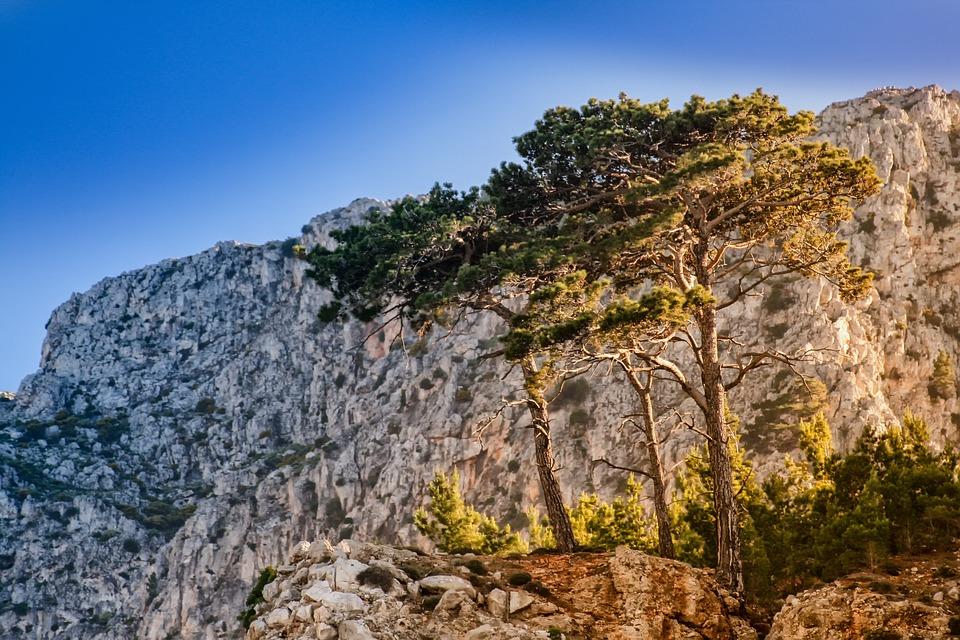 Pine, Steinig, Stones, Rock, Mountains, Landscape, Dry