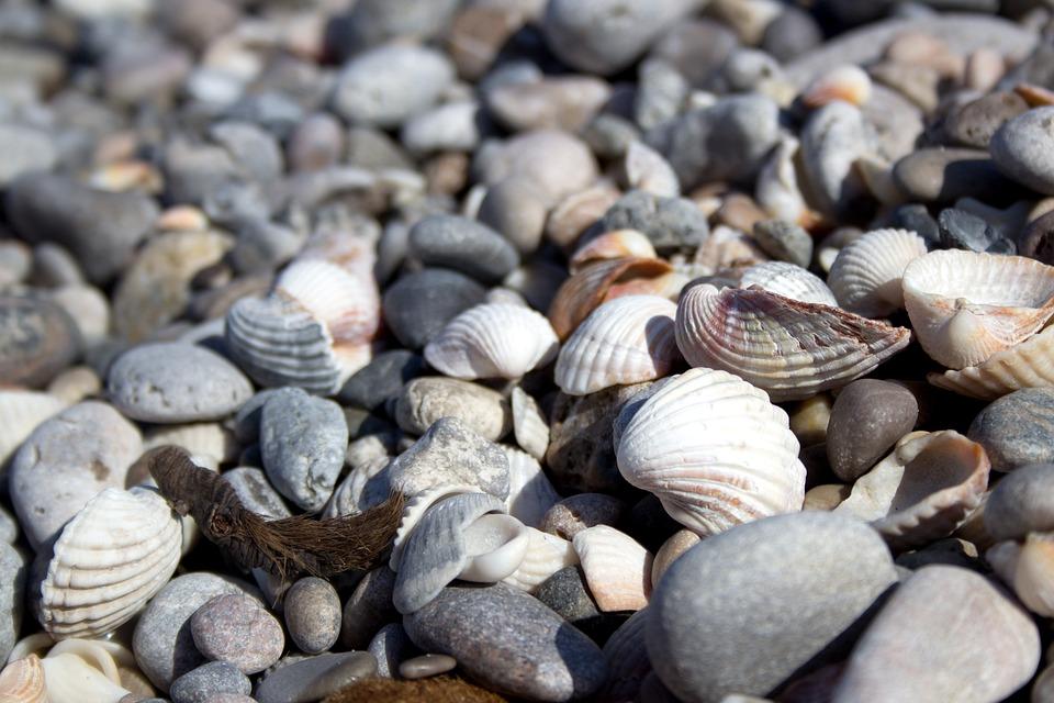 Shell, Beach, Stones, Sea, Holiday, Seashell, Coast