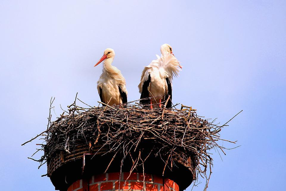 Storks, Birds, Screaming Birds, Nest, Storchennest