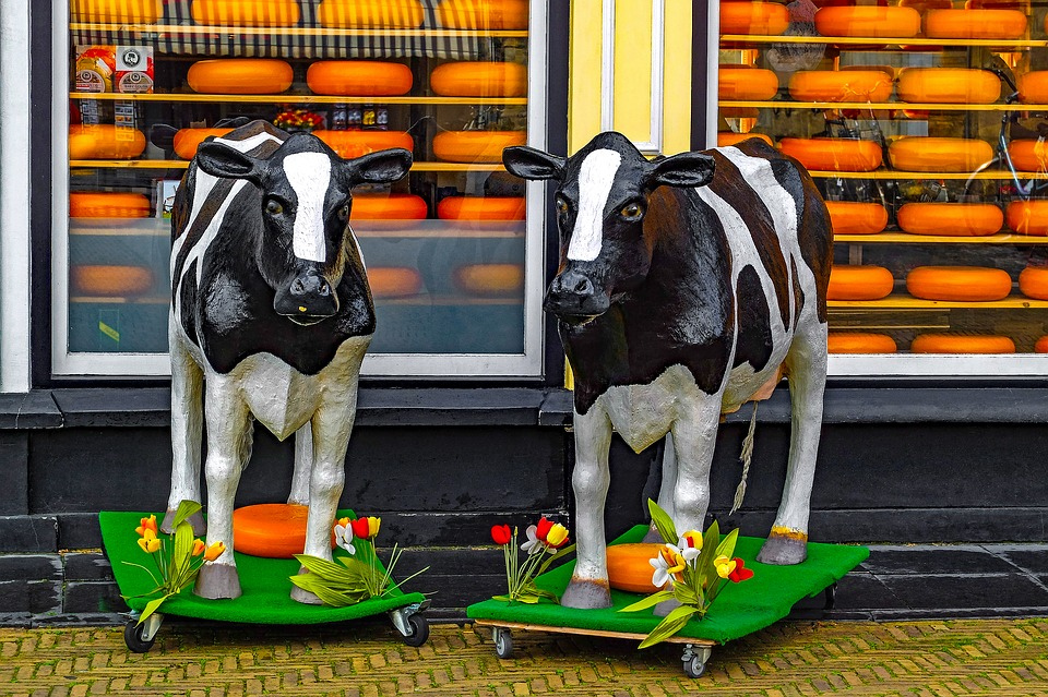 Shop, Store, Cheese, Gouda, Plastic Cow, Food, Product