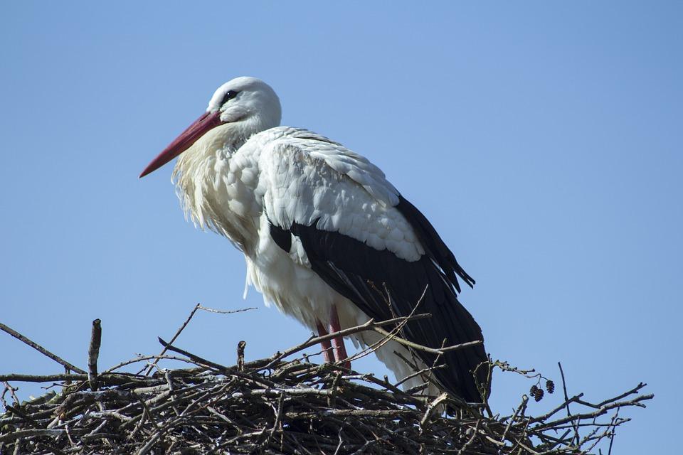 Bird, Animal World, Nature, Bill, Stork