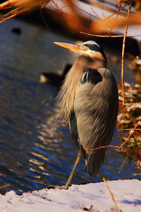 Bird, Stork, Heron, Water, Animal, Nature, Wildlife