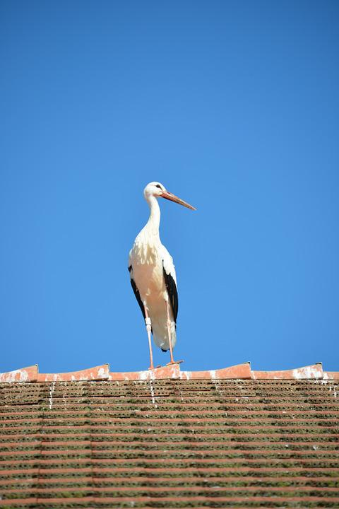 White Stork, Stork, Bird, Animal, Rattle Stork, Roof