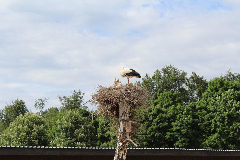 Stork, Nest, Park, Storks, Rattle Stork, Summer