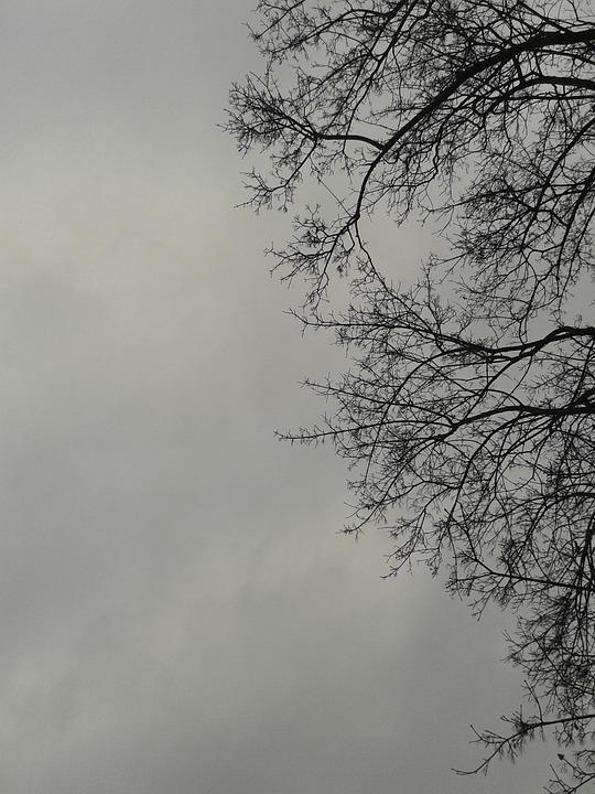 Tree, Storm, The Sky, Clear