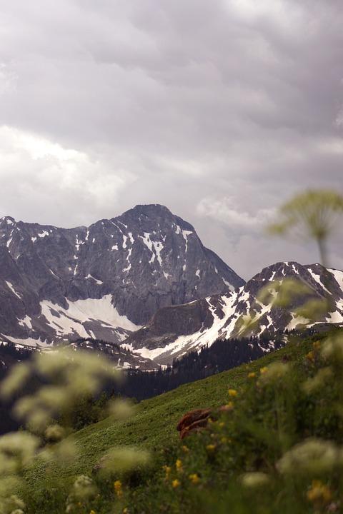Mountain, Colorado, Wildflowers, Storm, Outdoors