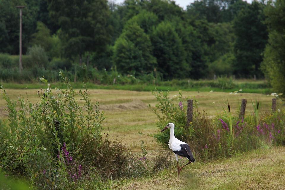 Stork, Eindhoven, Gijzenrooi, Stratum
