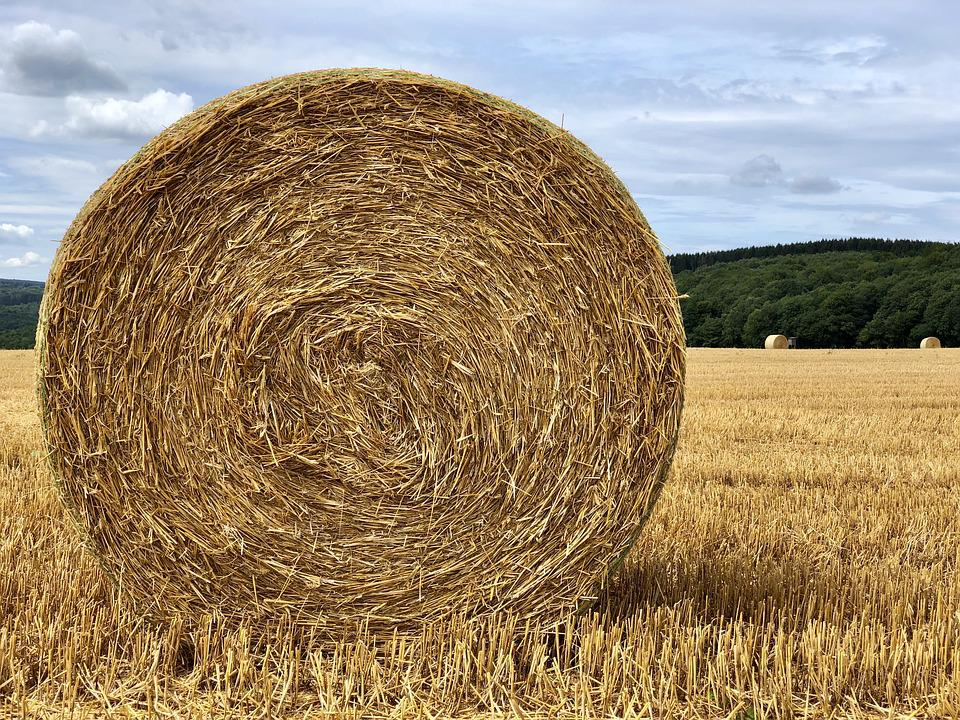 Straw, Straw Bales, Harvest, Field, Agriculture