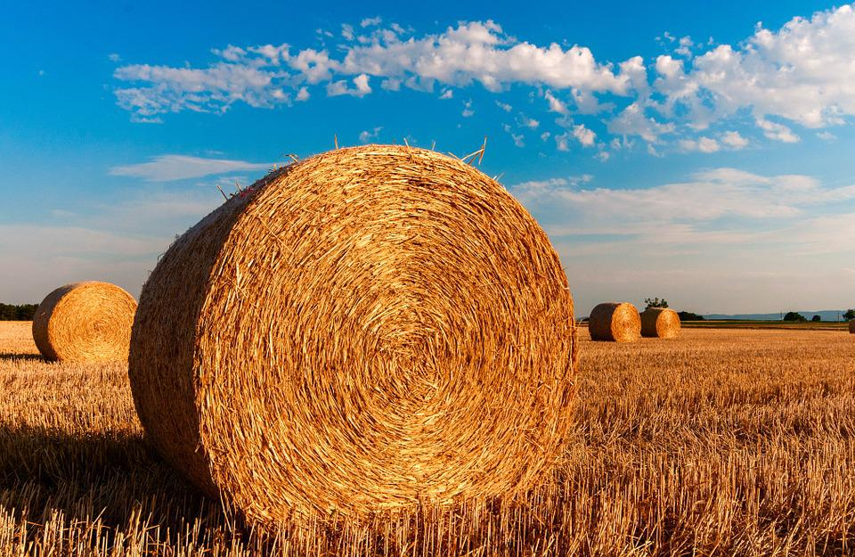 Straw Bales, Stubble, Agriculture, Summer, Straw