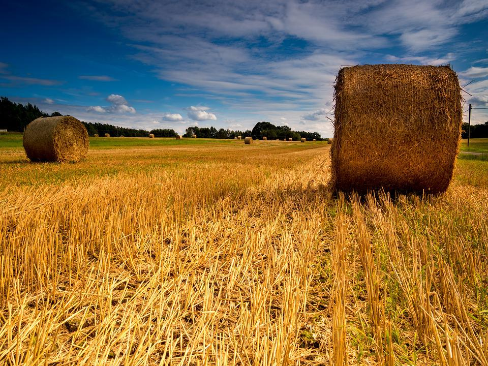 Landscape, Field, Straw, Straw Bales, Agriculture