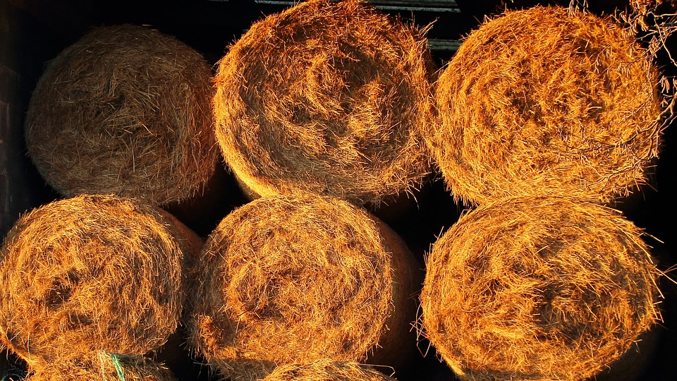 Straw Bales, Straw, Agriculture, Golden, Harvest, Food