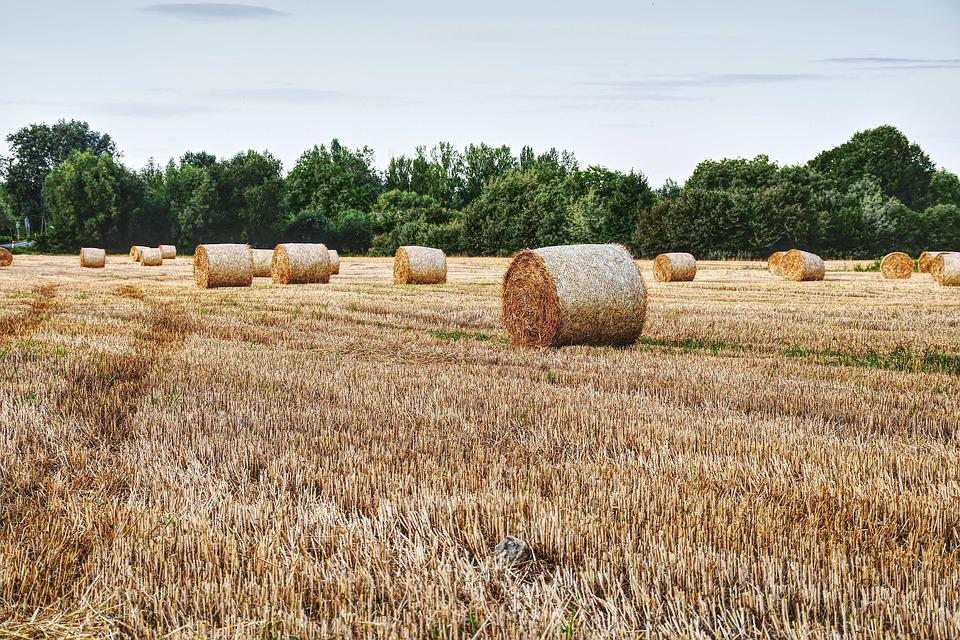 Straw, Field, Summer, Agriculture, Harvest, Cereals