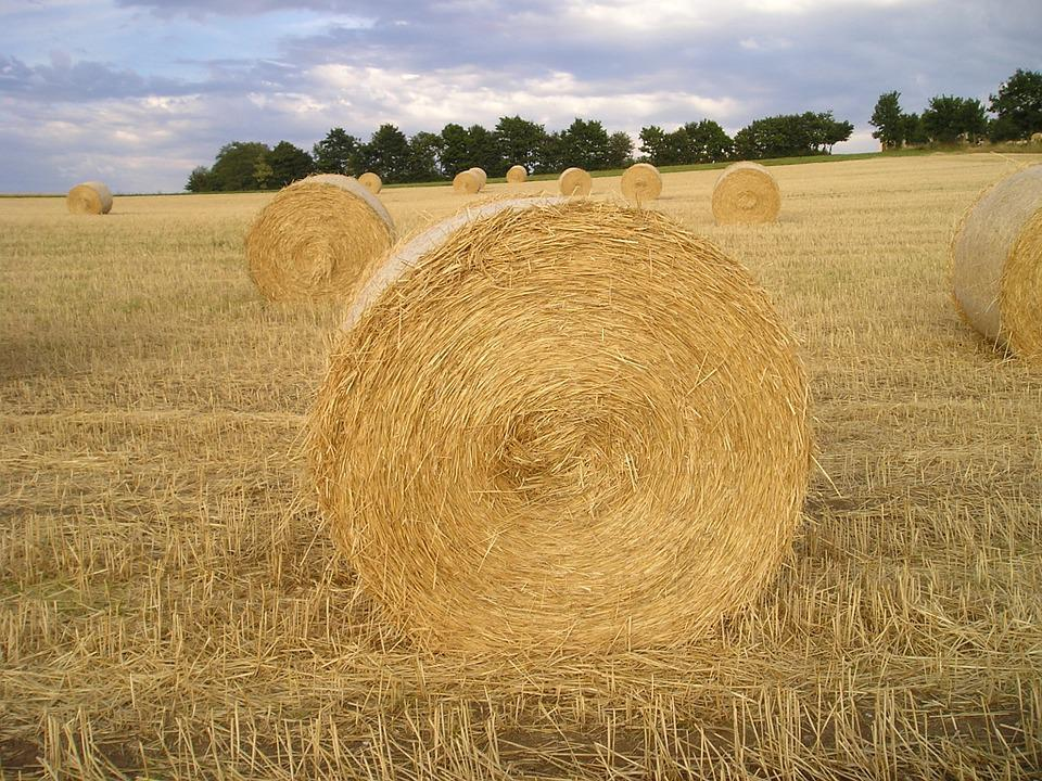 Straw Bales, Field, Straw, Hay, Harvest, Cereals