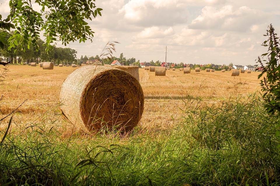 Field, Farm, Hay, Landscape, Straw, Rural District