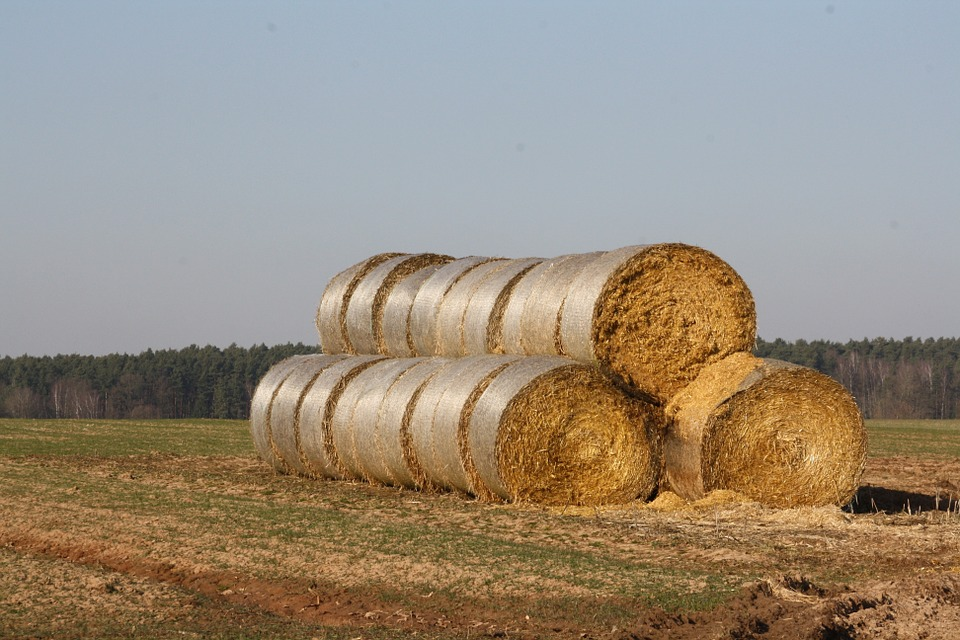 Straw Bales, Straw, Hay, Hay Bales, Meadow, Landscape