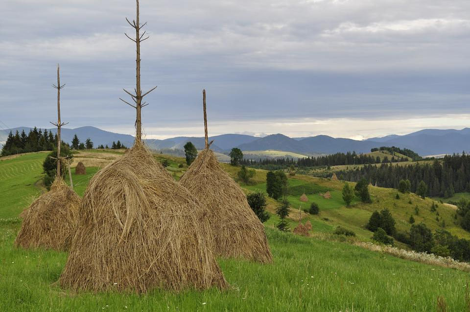 Hay, Summer, The Carpathians, Straw, In The Summer Of