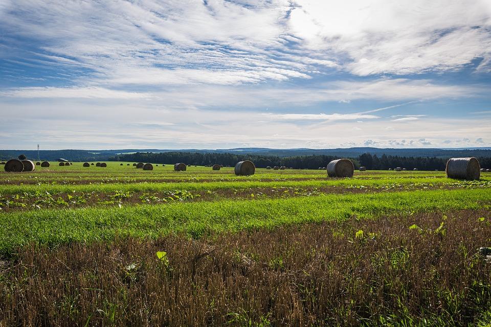 Field, Straw, Landscape, Straw Bales, Harvest, Nature