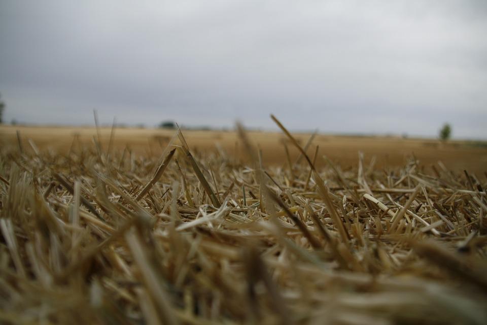 Field, Straw, Mowing, Segar, Landscape, Summer