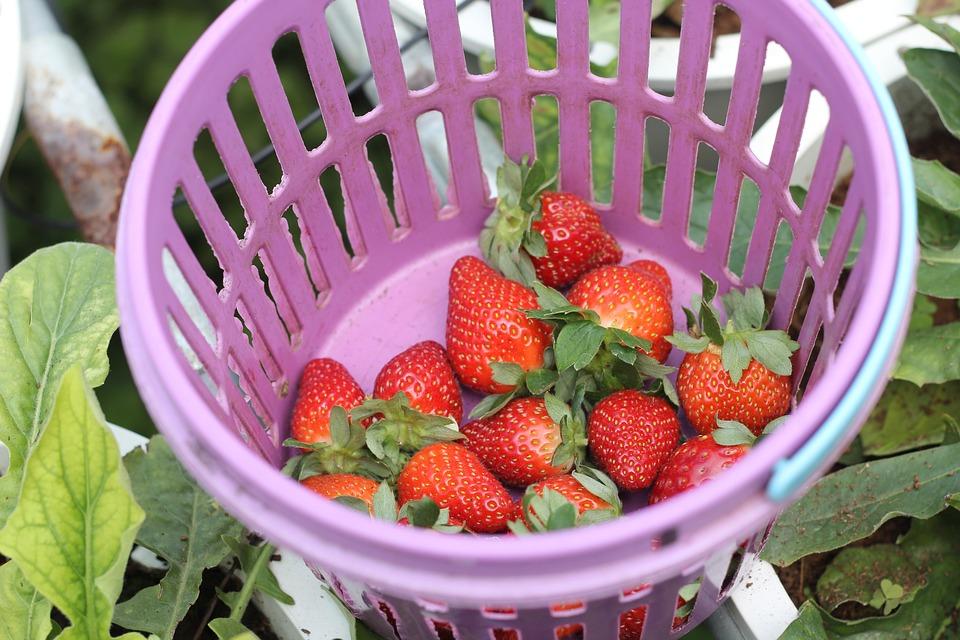 Strawberry, Basket, Red, Food, Fruit, Strawberries