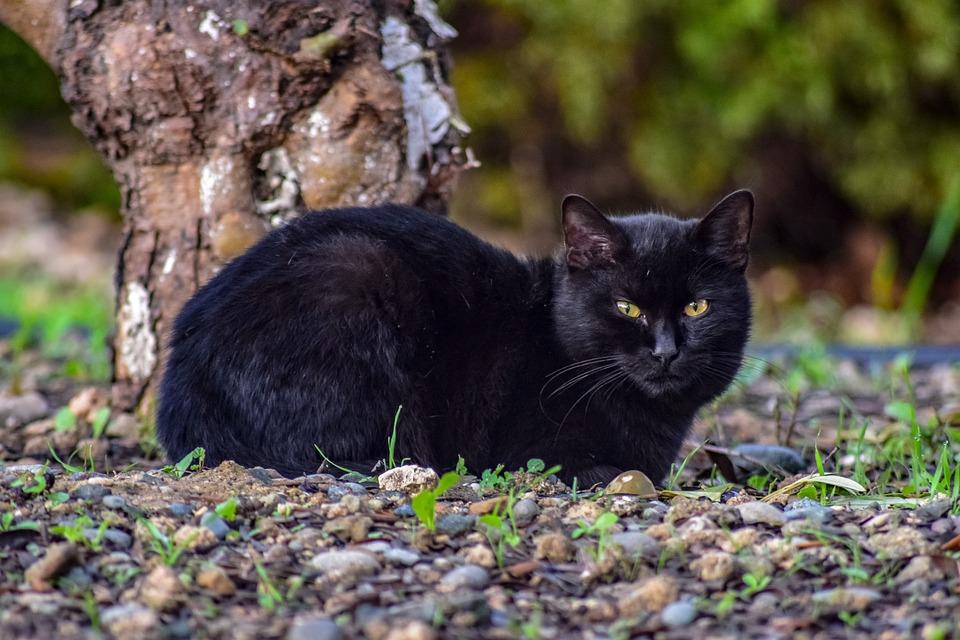 Cat, Stray, Animal, Curious, Suspicious, Homeless