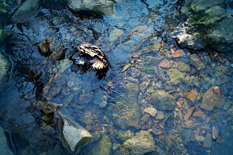 Water, Stream, Creek, Nature, Flow, Wet, Blue, Motion