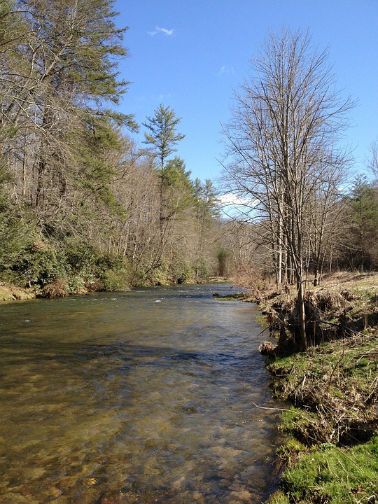 Stream, River, Trees, Nature, Water, Bank