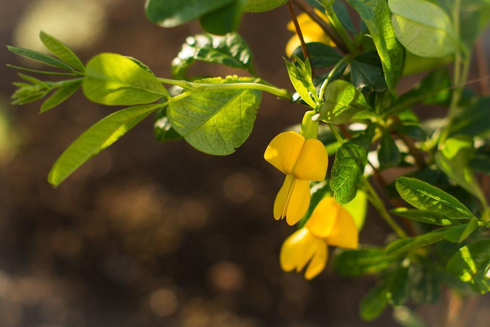 Acacia, Spring, Flowers, Yellow, Bloom, Street, May