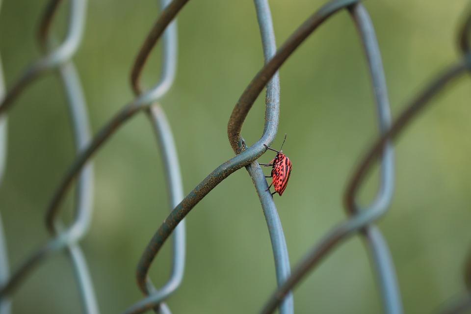 Strip Bug, Bug, Graphosoma Lineatum, Beetle, Insect