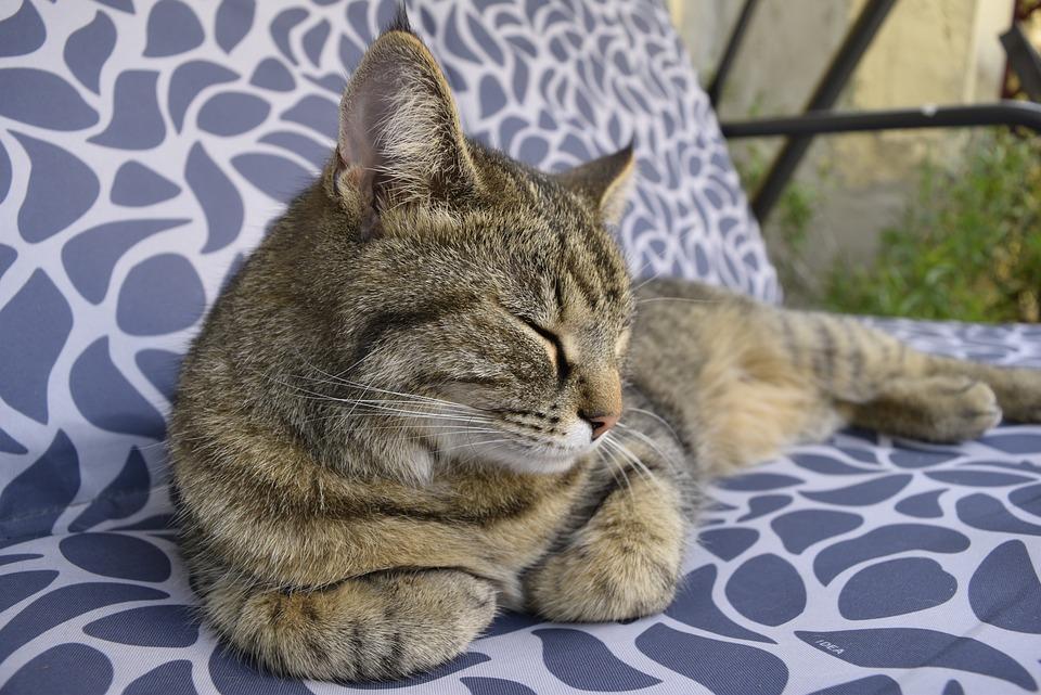 Cat, Sleep, Striped Porch Swing, Peaceful, Cute, Fur