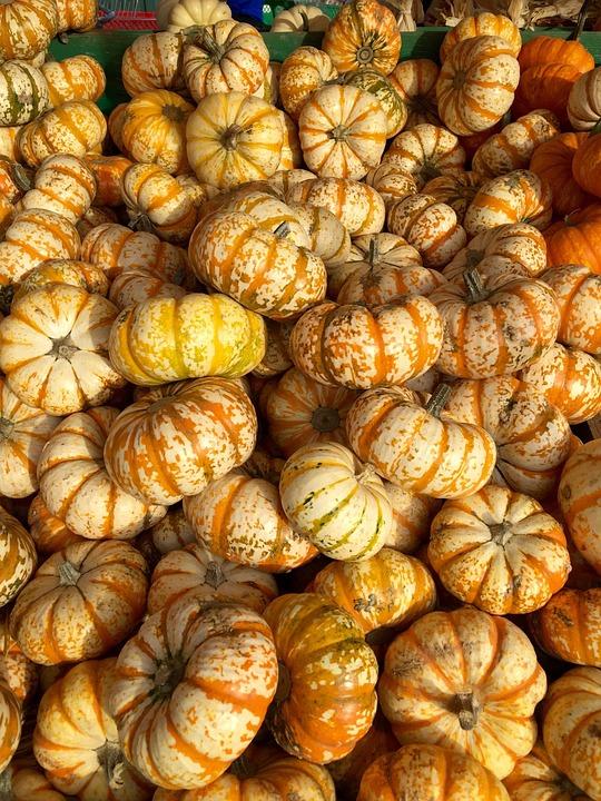 Pumpkins, Squash, Stripes, Garden, Produce