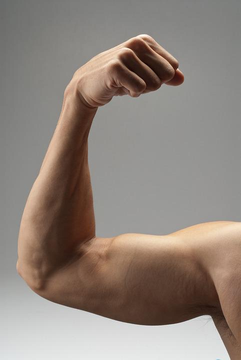 arm muscles essay