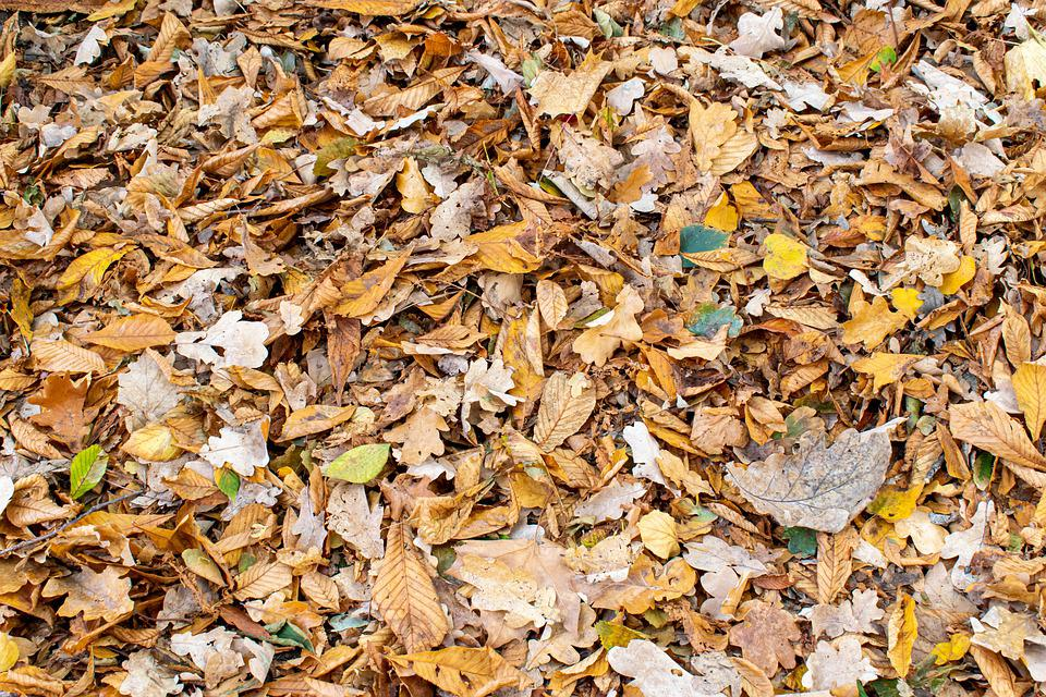 Fall Foliage, Leaves, Background, Structure, Nature