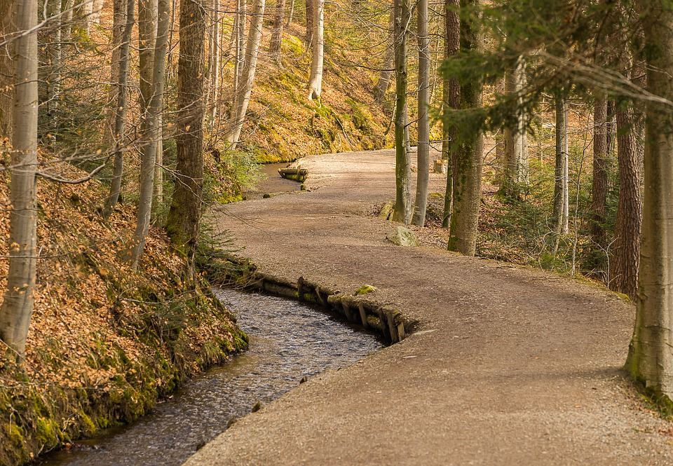 Tree, Wood, Nature, Forest Path, Road, Structure