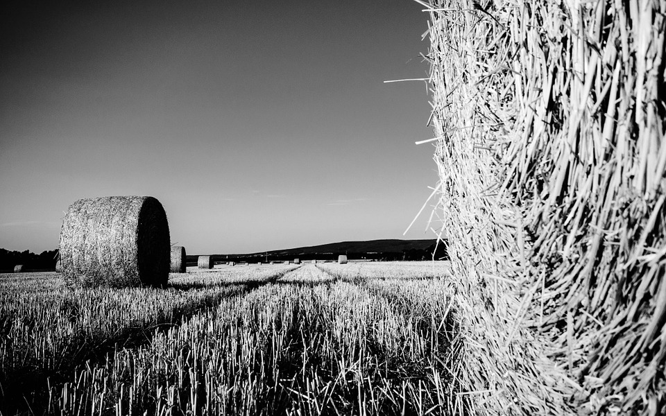Field, Straw, Straw Bales, Harvest, Landscape, Stubble