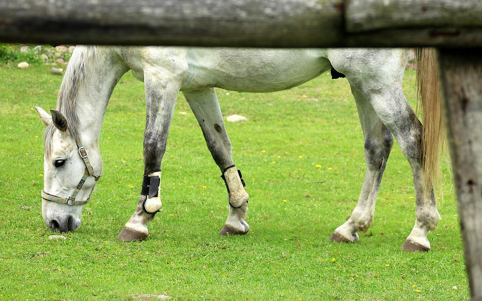 The Horse, Stud, Animals, Farm, Lawn, Nature