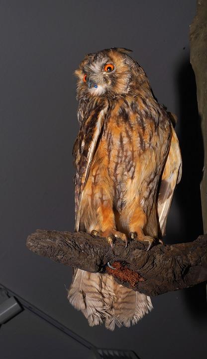 Eagle Owl, Bird, Hunting Trophy, Stuffed, Nocturnal