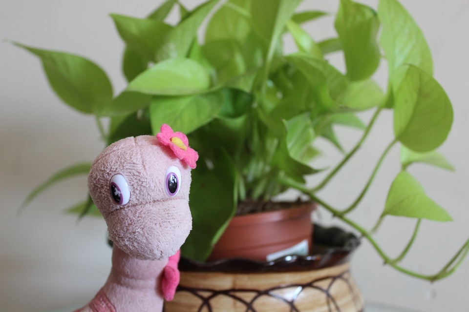 Dinosaur, Toy, Stuffed Toy, Potted Plant, Animal, Model