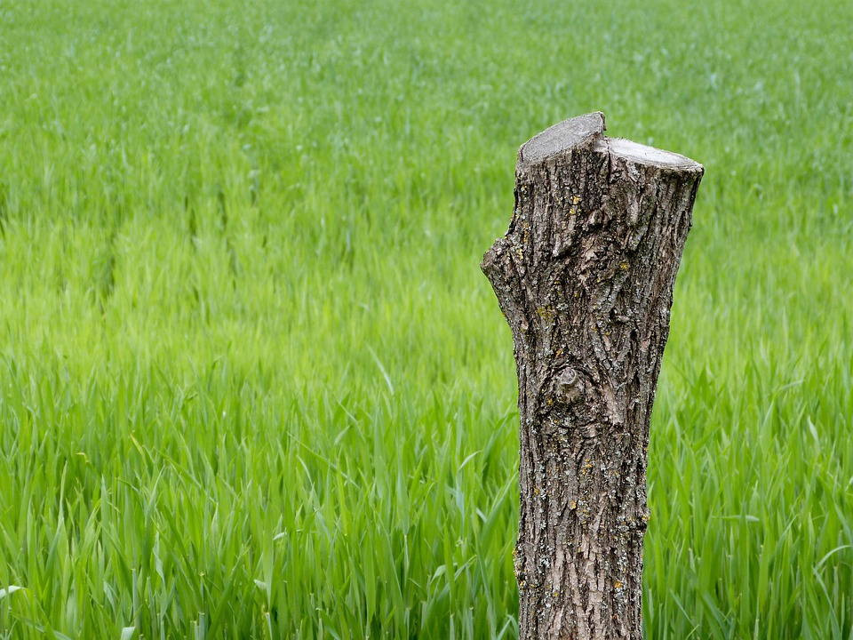 Tree, Stump, Dead, Wood, Nature, Forest, Trunk