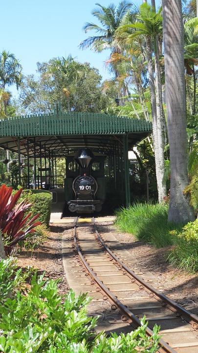 Steam Locomotive, Subtropical, Garden