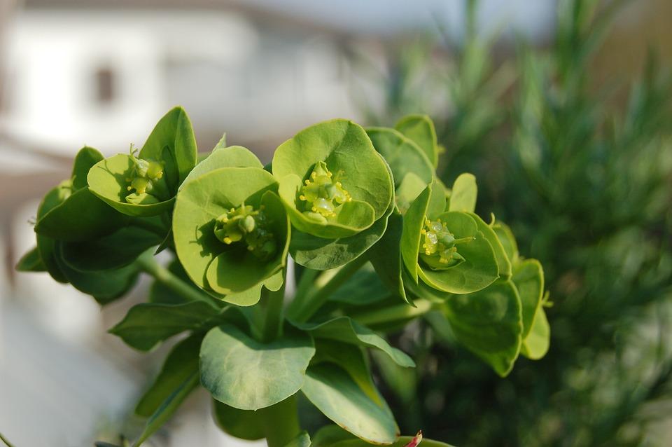 Leaf, Nature, Succulent Plant, Crassulacea, Succulentes