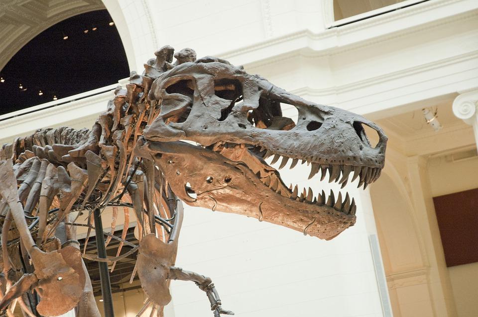 Dinosaur, Fossil, T-rex, Sue, Paleontological