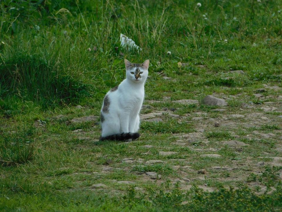 Cat, Animals, Home, Summer