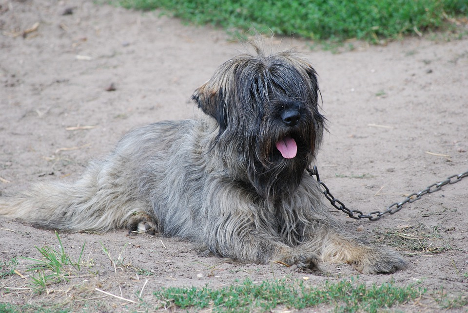 Dog, And The Tramp, Rest, Summer, Fur, Animals, Snout