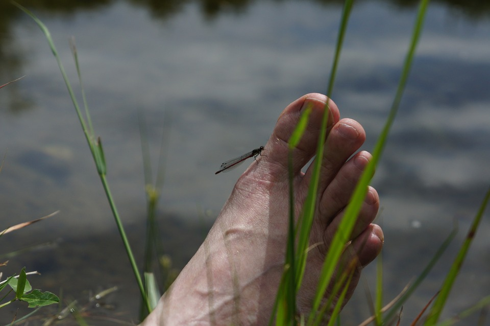 Foot, Ten, Water, Grass, Feet, Barefoot, Nature, Summer