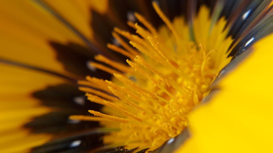 Nature, Flower, Flora, Bright, Summer, Beautiful