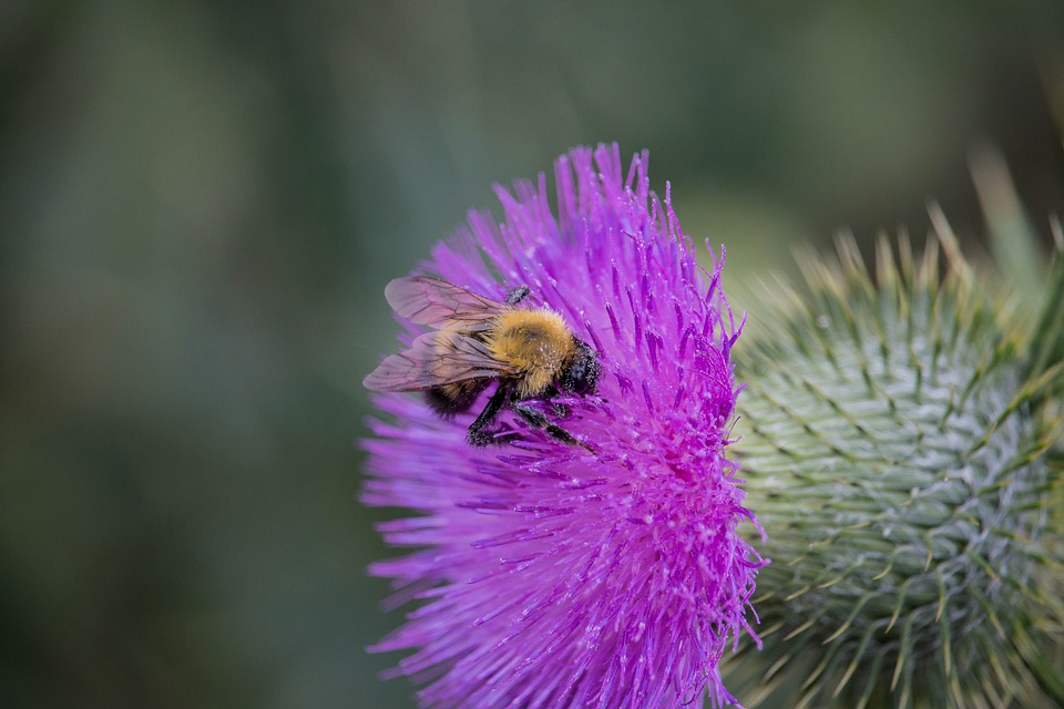 Nature, Plant, Flower, Insect, Thorn, Summer, Bee