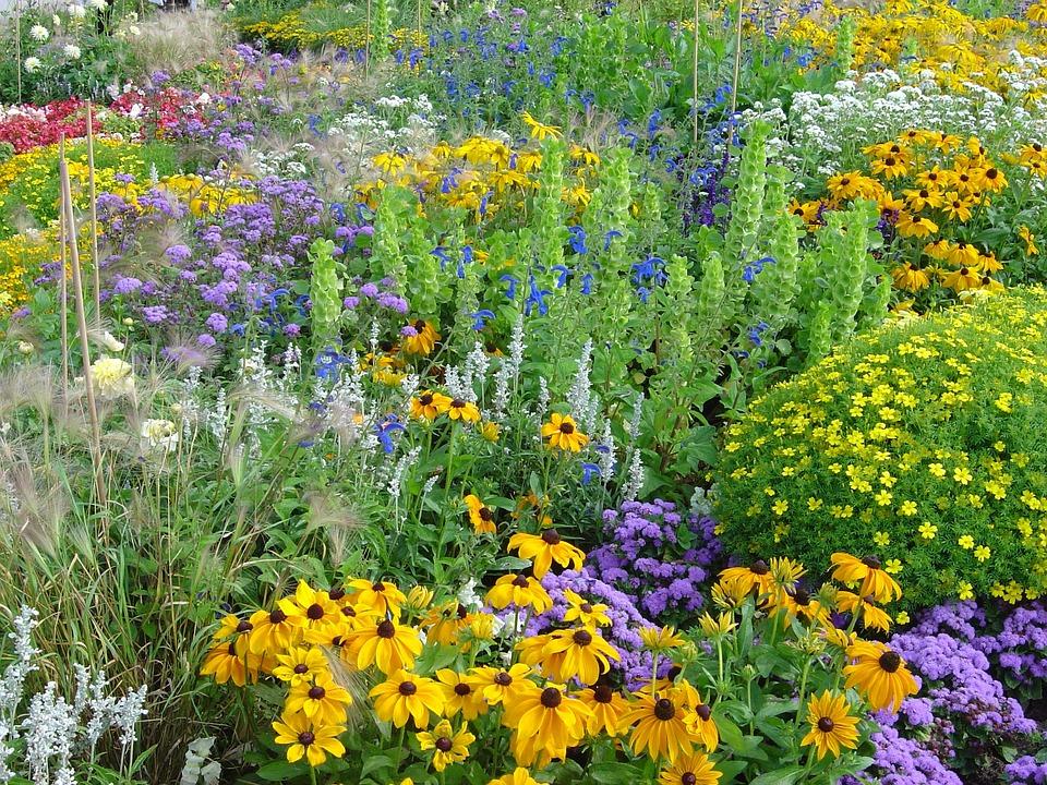 Flowers, Summer, Garden, Park, Biodiversity, Colorful