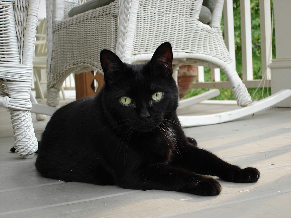 Cat, Black, Porch, Summer, Feline, Animal, Pet, Eyes